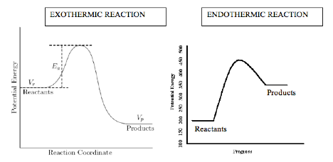 exothermic vs endothermic essay
